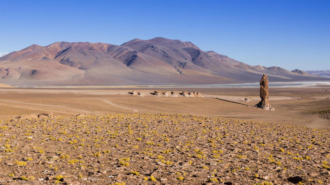 """Дожди в """"марсианской"""" пустыне Атакама уничтожили практически всё живое"""