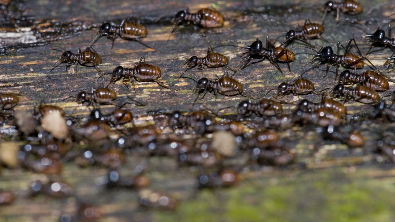 Отравленная бумага показала, как термиты помогают тропическим лесам противостоять засухе