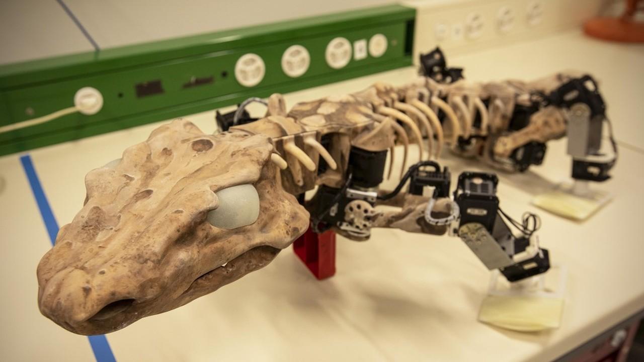 Роботизированное ископаемое: существо, жившее 300 миллионов лет назад, прошлось по беговой дорожке