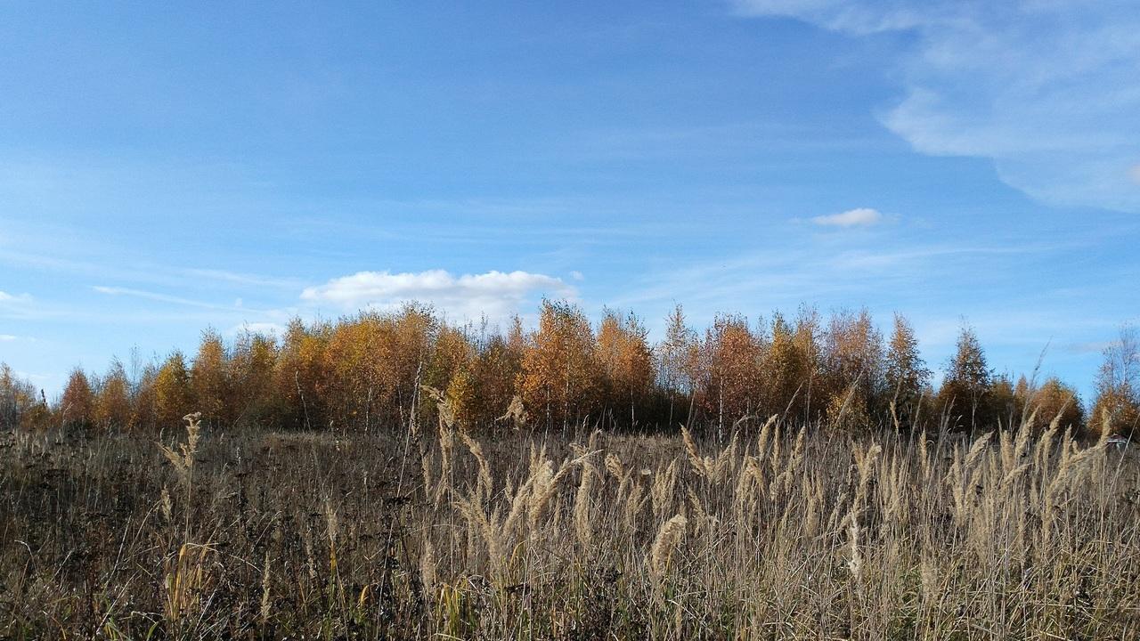 Лес на брошенных землях восстанавливается впятеро быстрее, чем считалось раньше