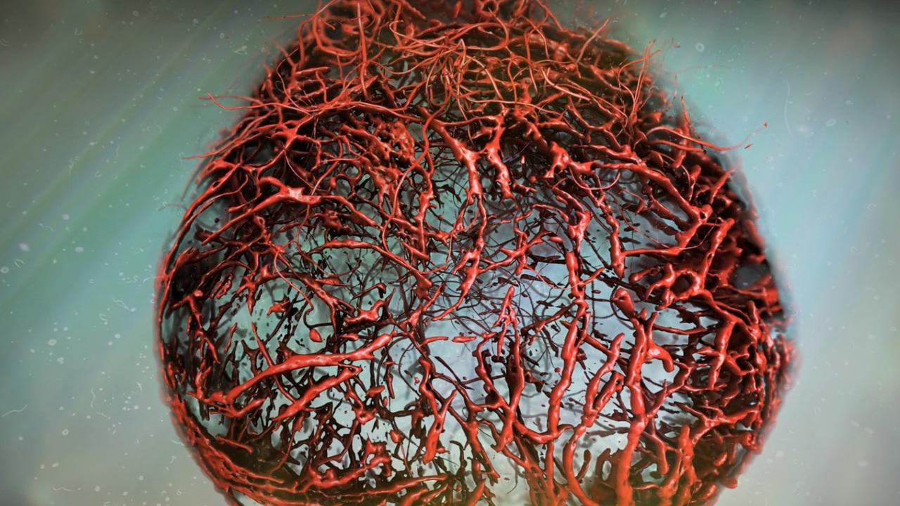 Для борьбы с диабетом и не только: выращены идеальные кровеносные сосуды человека