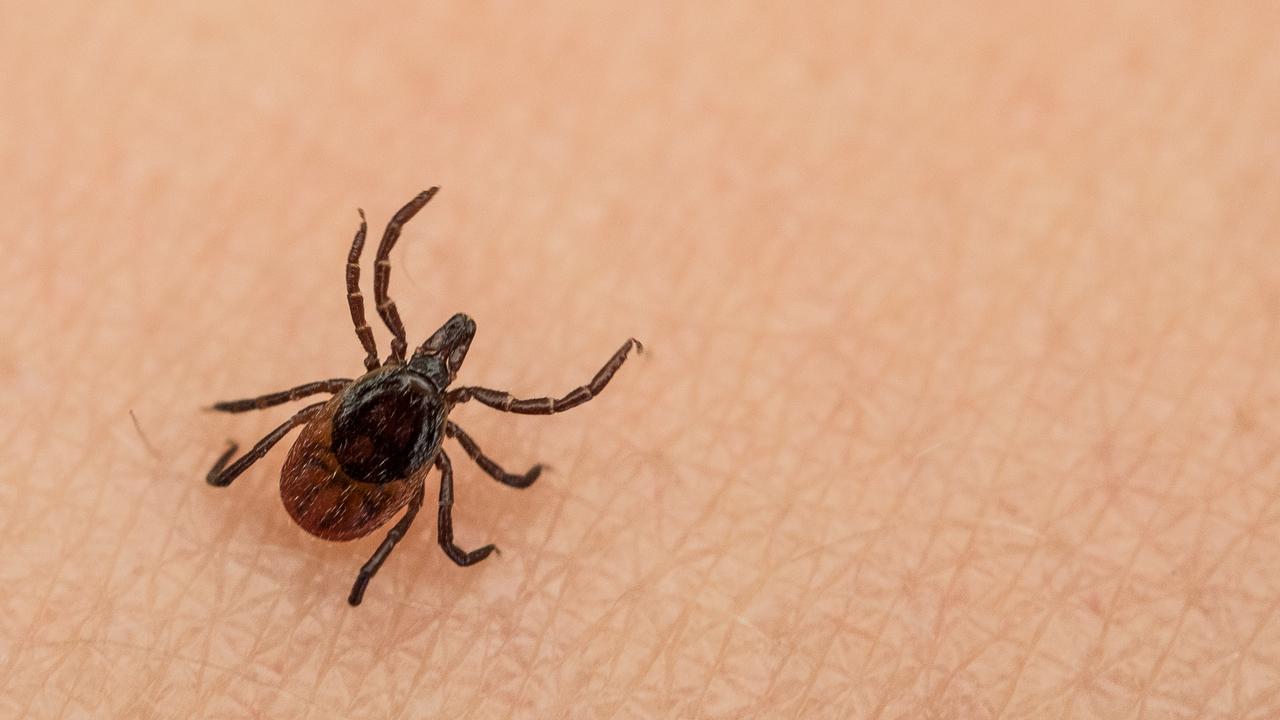 В Китае обнаружен новый вирус, который могут передавать клещи