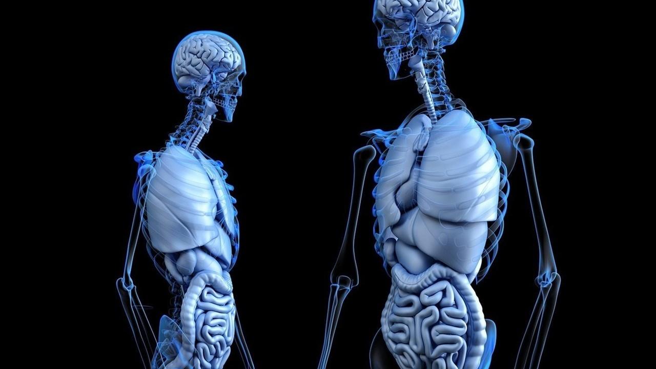 Бактерии кишечника помогают мозгу бороться с вирусами и последствиями их нашествий