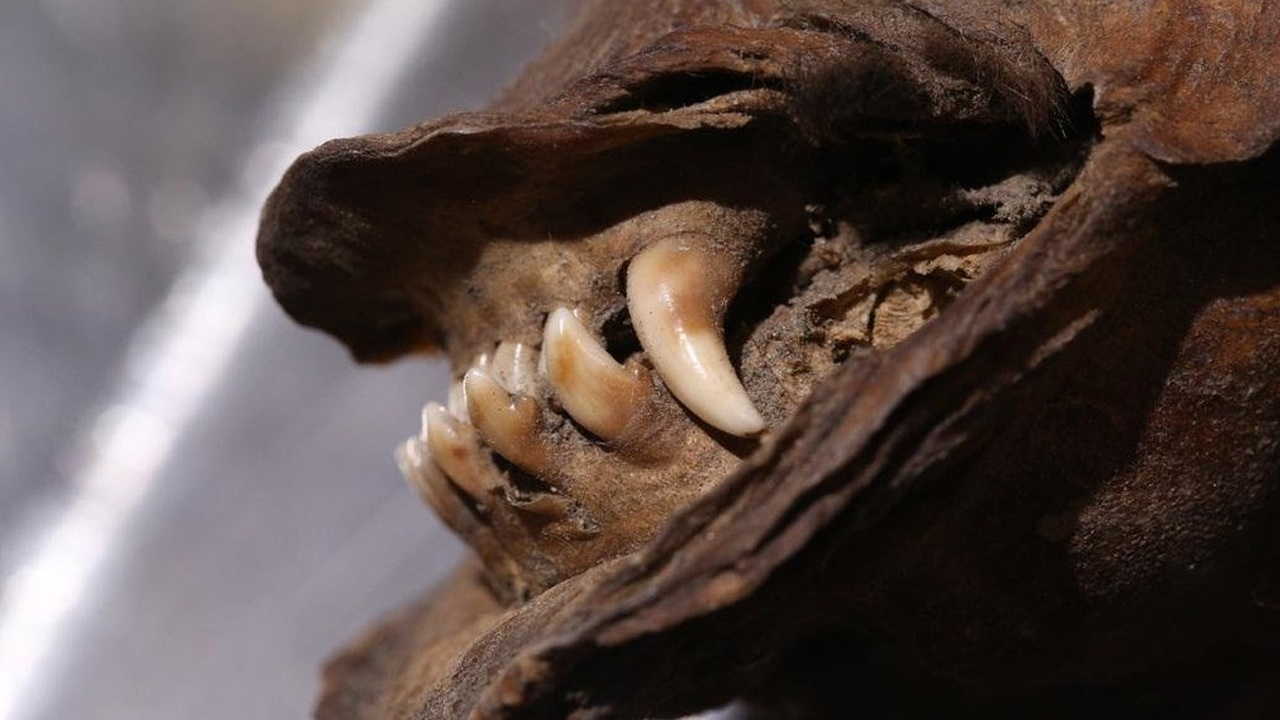 14 тысяч лет в мерзлоте: расшифрована самая древняя РНК
