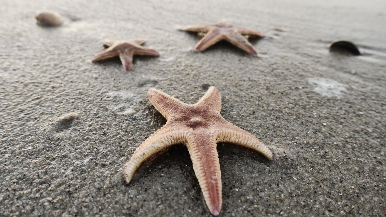 """Аналог """"гормона любви"""" заставил морских звёзд вывернуть желудок"""