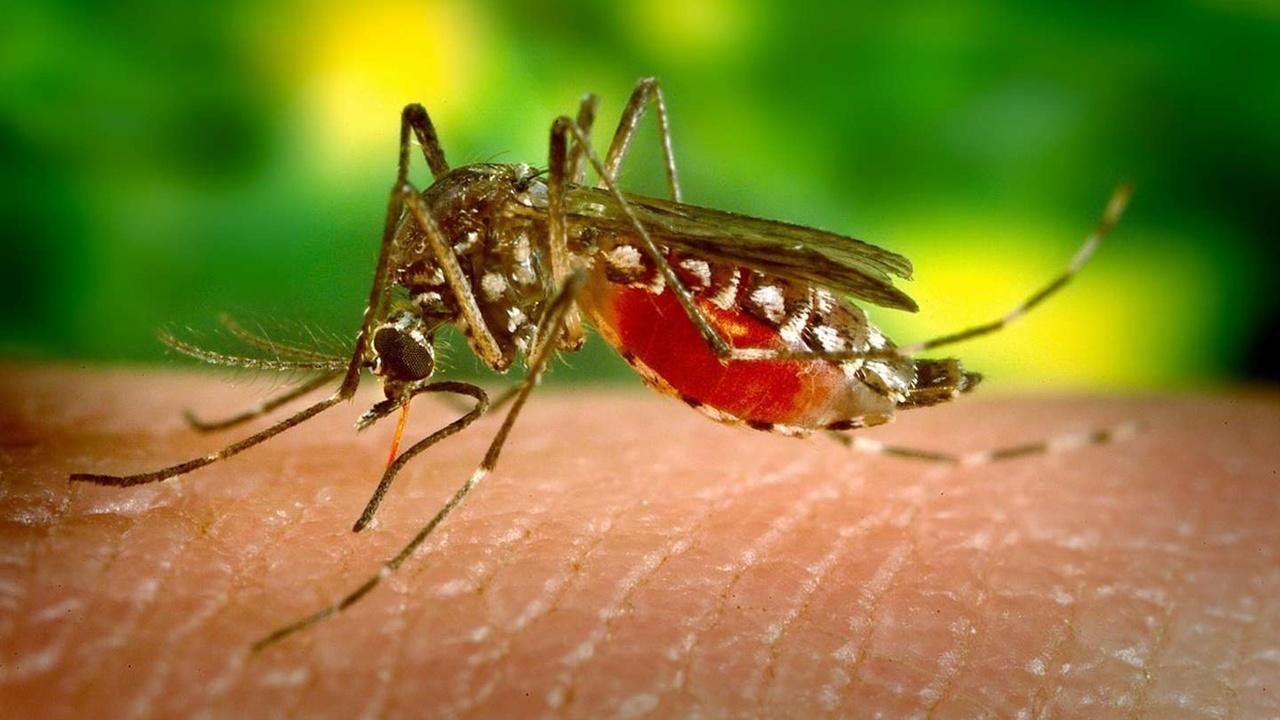 """Вместо фумигатора: графеновый """"щит"""" обеспечит двойную защиту от комаров"""