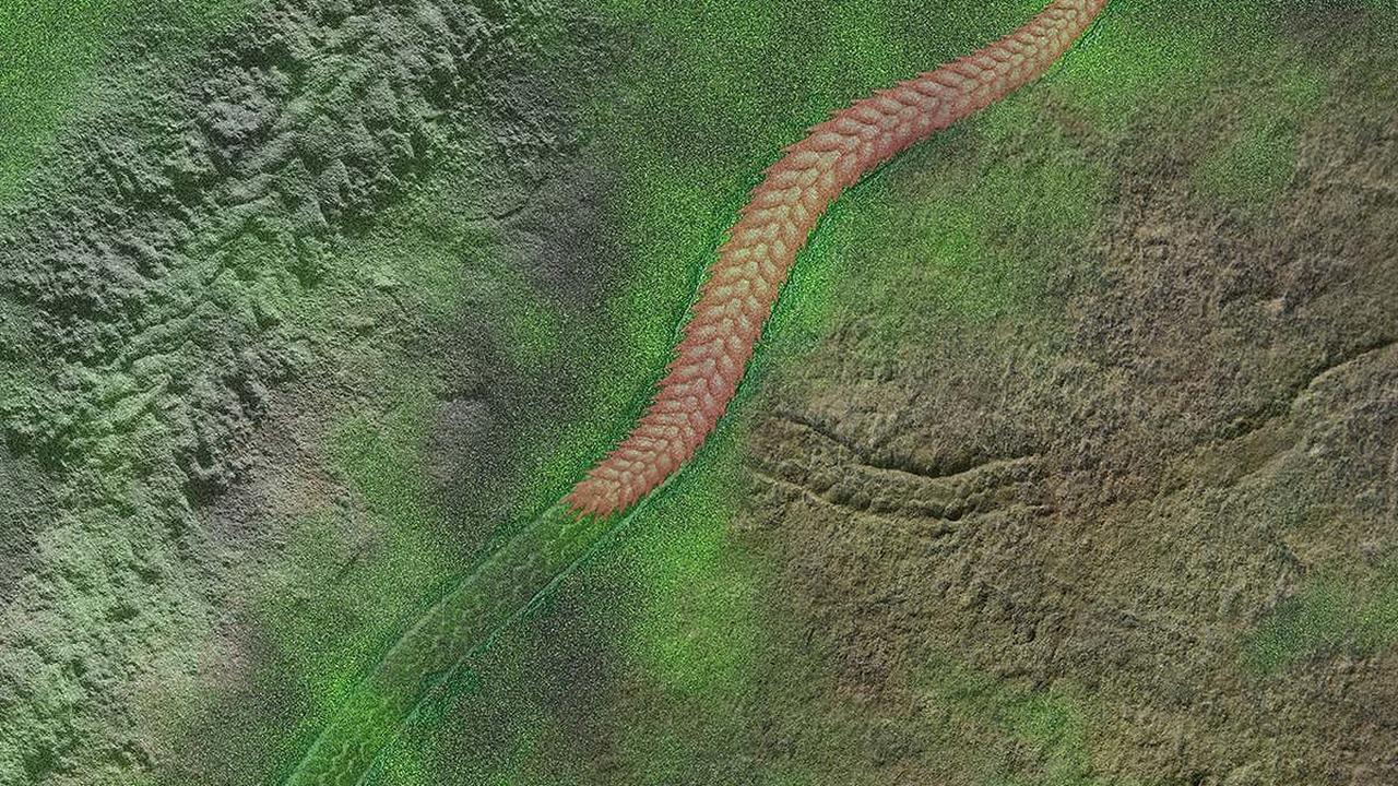 """Палеонтологи нашли следы """"марша смерти"""" существа возрастом полмиллиарда лет"""