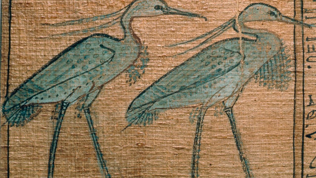 Откуда столько птиц? Древние египтяне мумифицировали миллионы ибисов