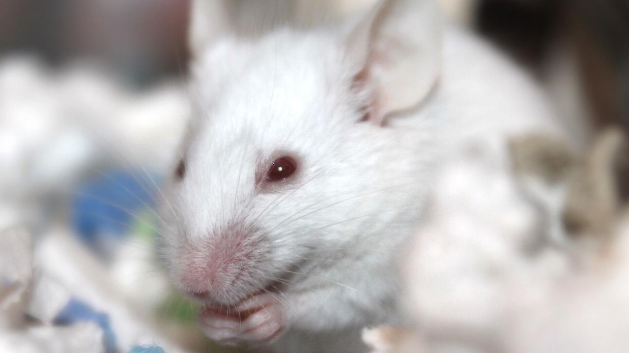 Биохимики обратили вспять признаки умственной отсталости при синдроме Дауна