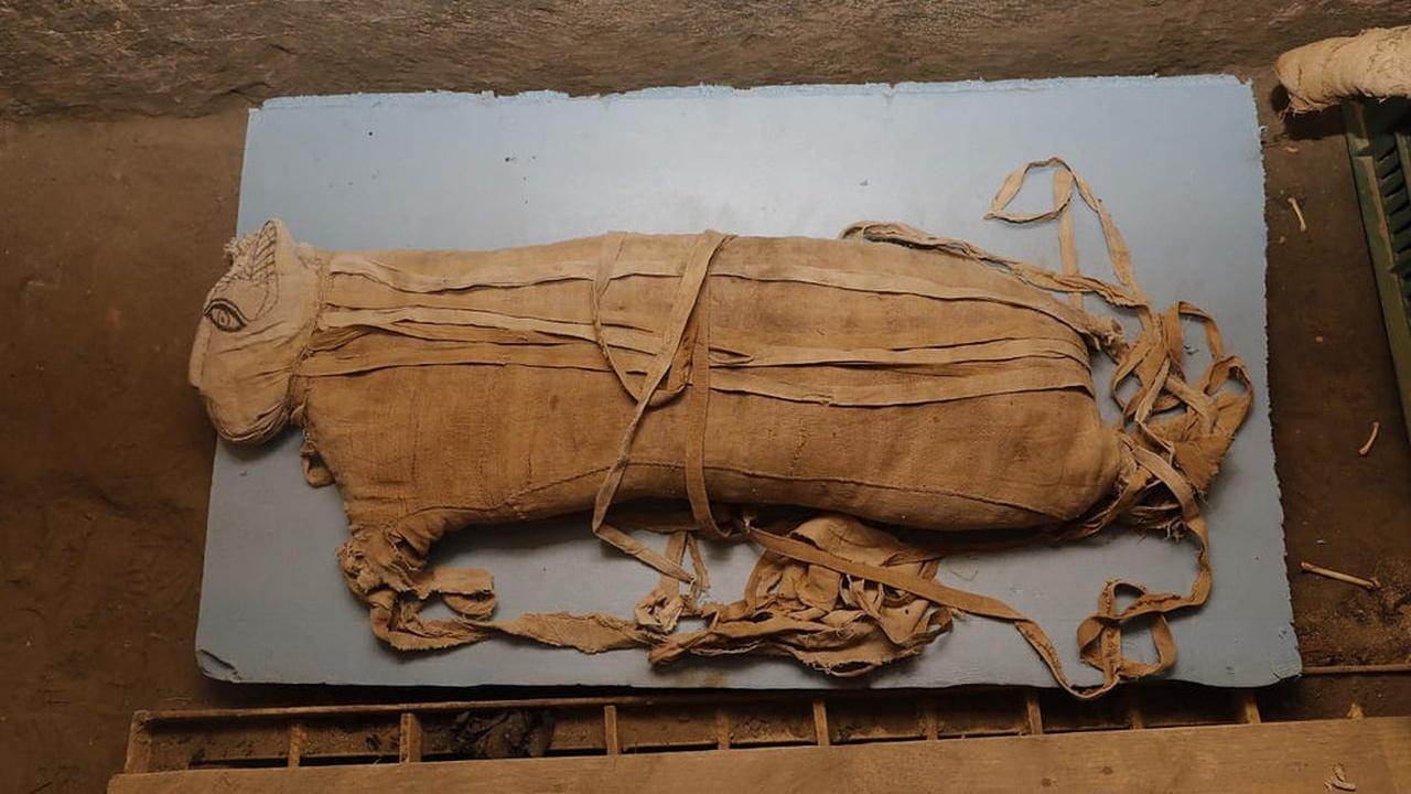 Кобры, крокодилы и большие кошки: в Египте найден тайник с редчайшими мумиями и артефактами