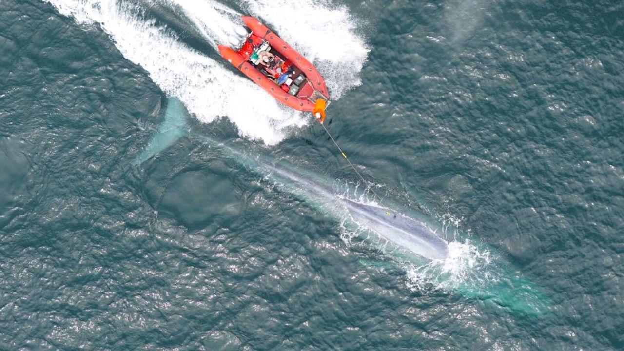 Первое в истории измерение пульса кита преподнесло океанологам сюрприз