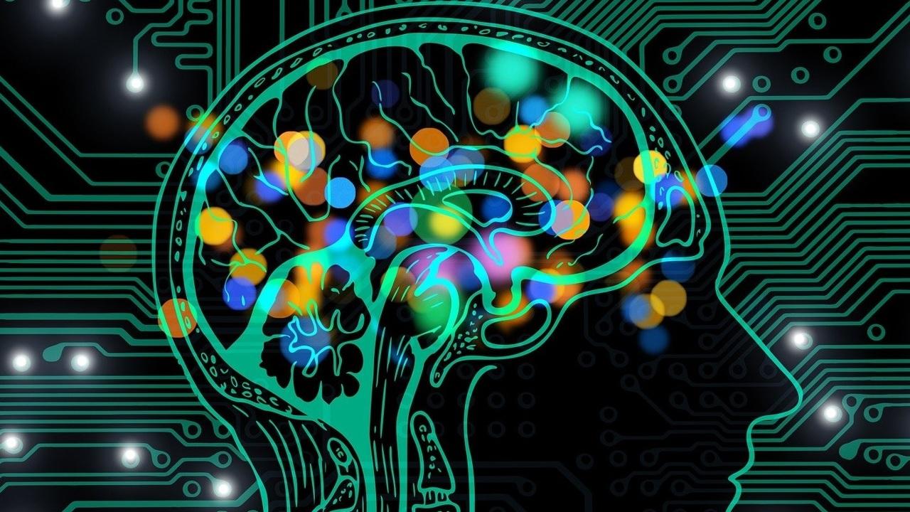 """Еда, эротика и деньги активируют разные """"зоны удовольствия"""" в мозге"""