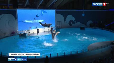 В столице Чечни открылся дельфинарий