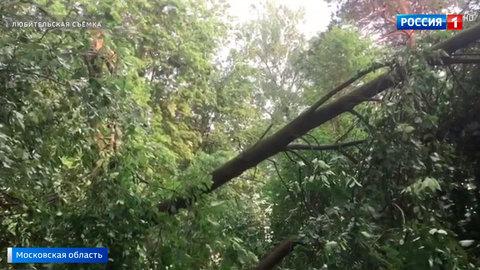 мной ураган в дмитровском районе фото своём