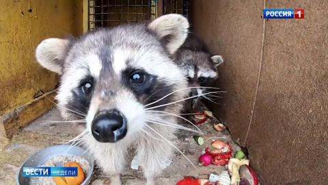 От новой инфекции страдают и животные