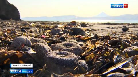 Экокатастрофа на Камчатке: что случилось в уникальной природной зоне