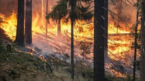 Аэромобильная группировка отправилась тушить лесной пожар в Саратовской области