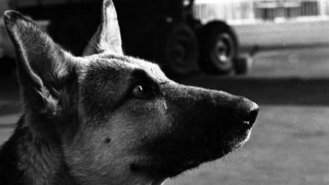 Рэгтайм, или Разорванное время. Собака Советского Союза