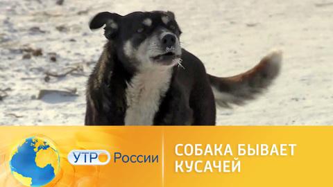 Утро России. Собака бывает кусачей: бездомные животные как угроза населению