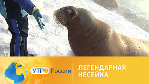 Утро России. Легендарная Несейка