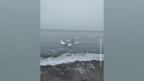 Погода 24. На Русской равнине начинается оттепель