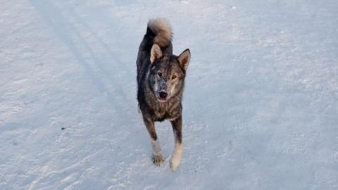 Видео из Сети. Новосибирские дети боятся ходить в школу из-за нападения бродячих собак