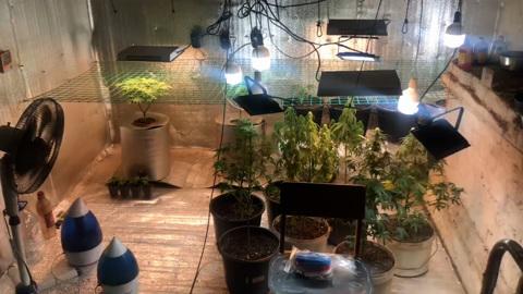 Видео из Сети. В заброшенном доме в Ивановской области обнаружена плантация конопли