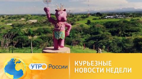 Утро России. Курьезные новости недели: бегемоты в Колумбии и башня из мыла