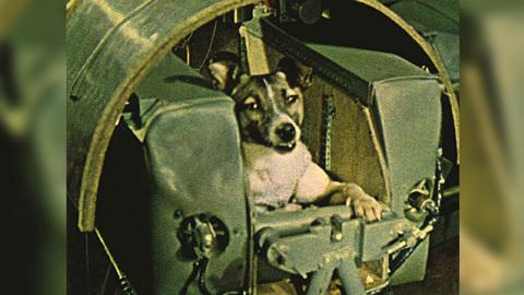 Животные-космонавты: от легендарной Лайки – до черепах и тихоходок