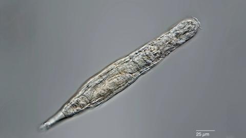 Учёные воскресили животное, которое провело 24 тысячи лет в вечной мерзлоте