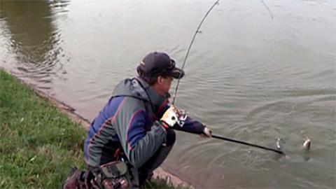 Моя рыбалка. Форель. Подмосковье