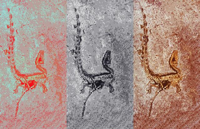 Анализ меланосом древних синозавроптериксов