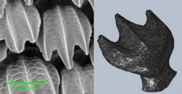 Искусственная акулья кожа и единичный зубчик