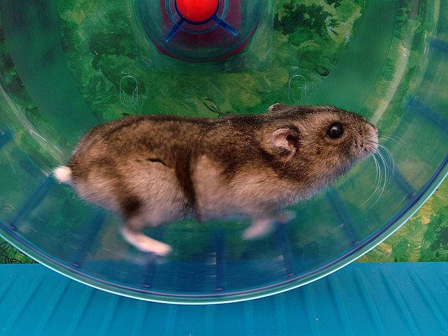 Мыши, из организма которых вывели свободные радикалы, пребывали в гораздо лучшей физической форме, чем их сверстники