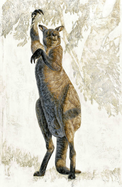 Древние кенгуру не умели прыгать