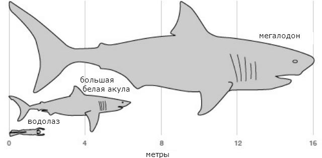 Графическое изображение гигантских размеров мегалодона