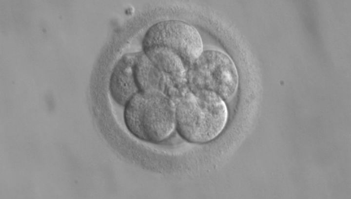 Редактирование генов на ранней стадии развития эмбриона может привести к неожиданным результатам в дальнейшем
