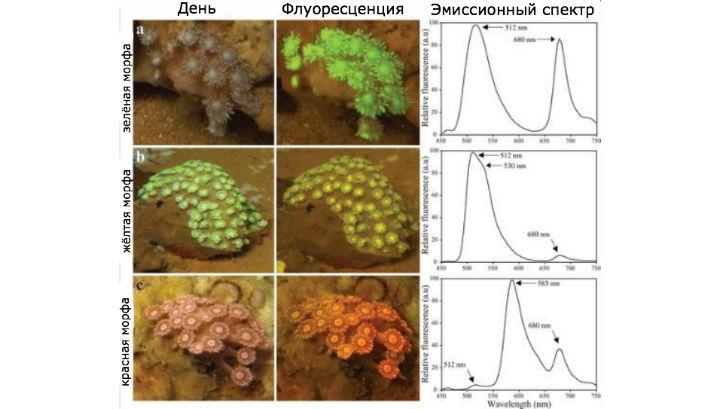 Кораллы продемонстрировали учёным свои возможности не только при дневном свете, но и в полной темноте