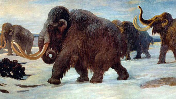 Мутации генов привели к тому, что шерстистые мамонты потеряли способность ориентироваться в новых условиях жизни и создавать пары со здоровым потомством.