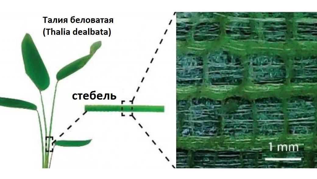 Стебли растений вдохновили исследователей на разработку нового универсального аэрогеля, который найдёт применение в гибкой электронике.