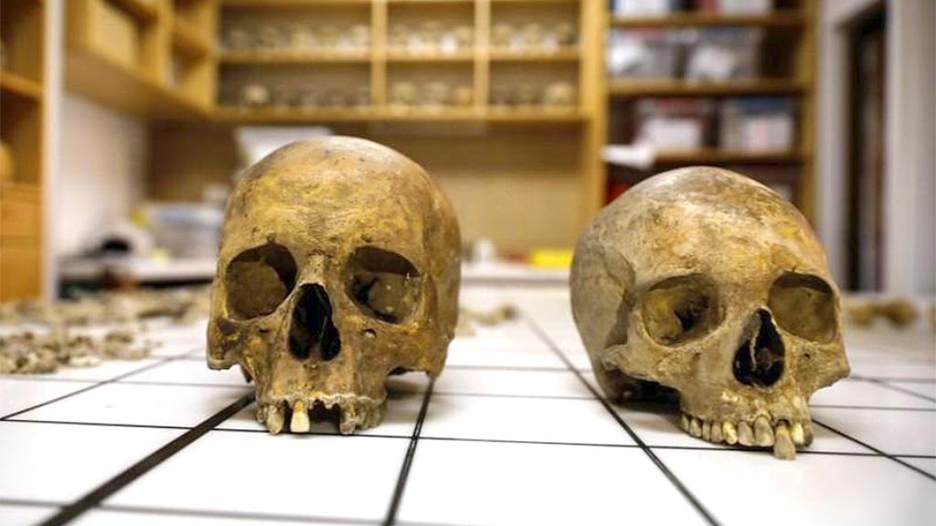 Черепа мужчины и женщины из римского саркофага. Фото: REUTERS / Marko Djurica
