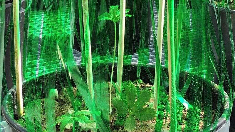 Учёные использовали вертикальные зелёные фильтры, чтобы уменьшить количество света.