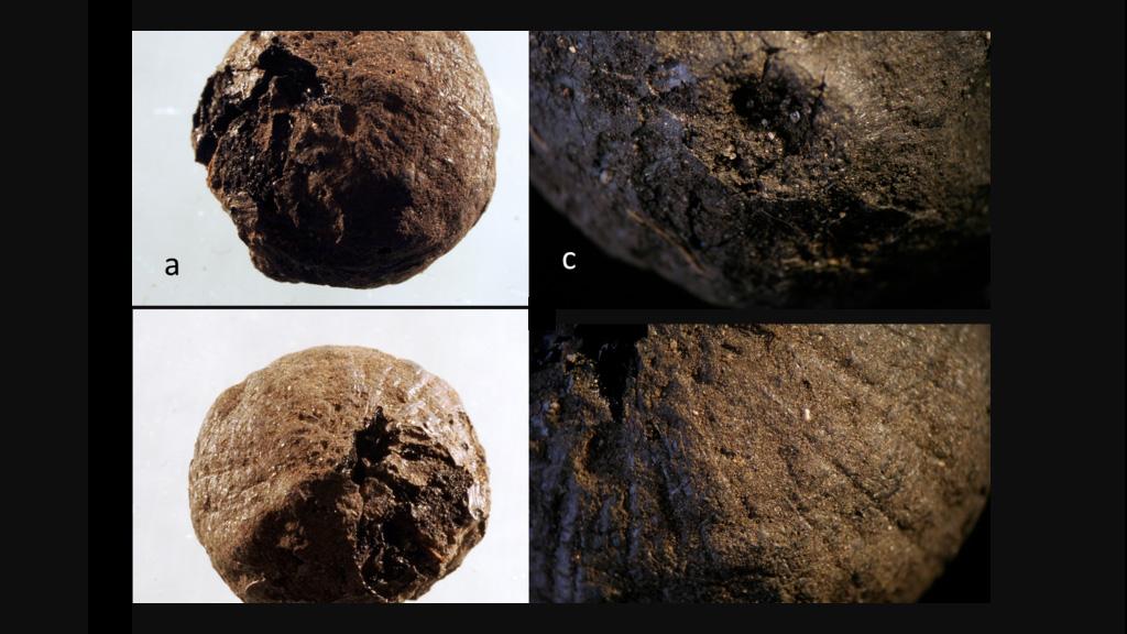 Луковица, найденная в Сандби Борг. Фото: Jens Heimdahl / The Swedish History Museum