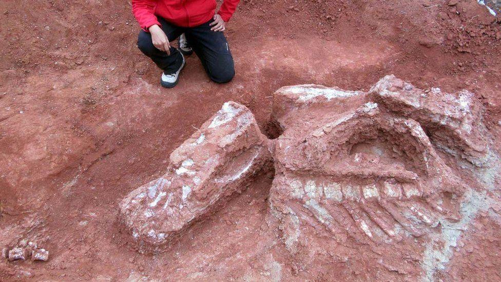 """Останки нового вида нашли """"в компании"""" уже известных палеонтологам ящеров Lessemsaurus sauropoides."""