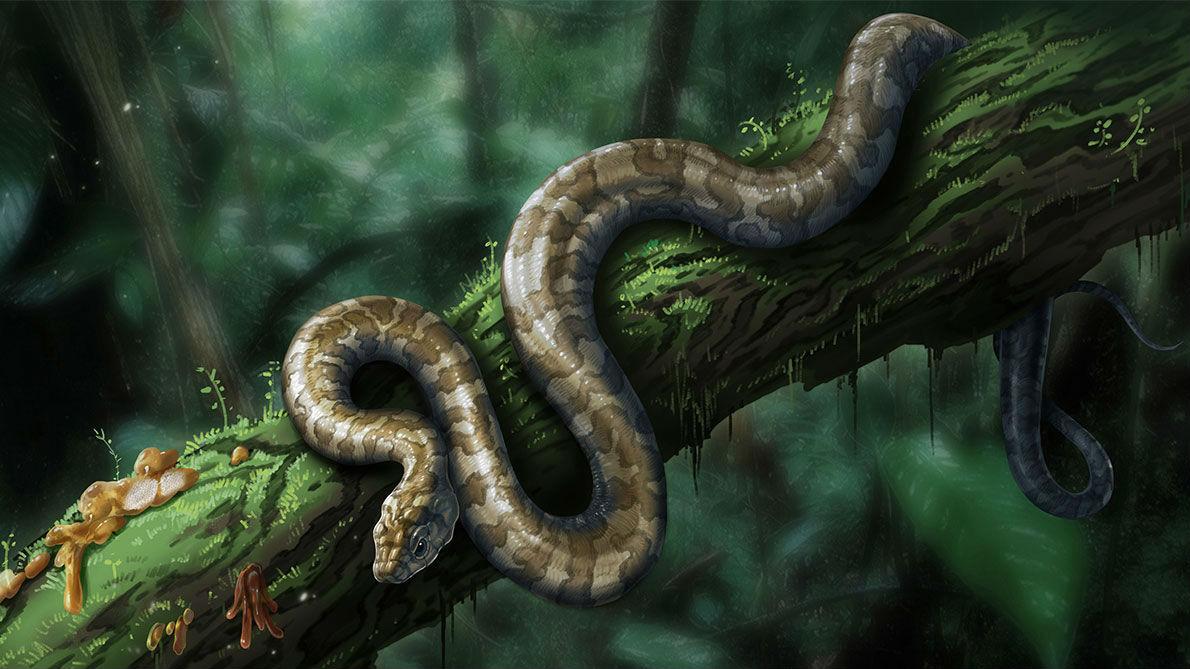 Художественное изображение змеи, обитавшей в меловом периоде.