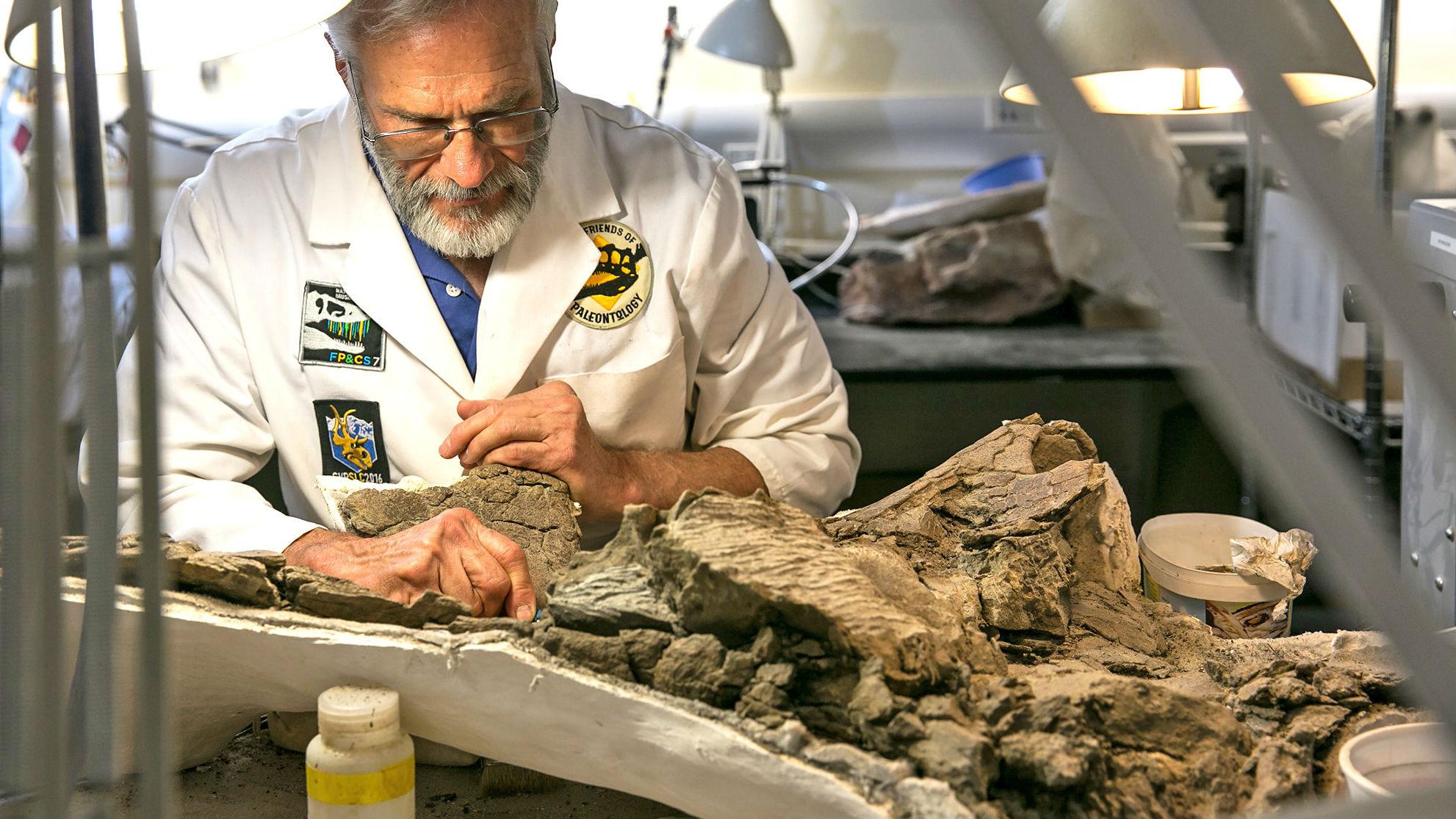 Работник музея Рэнди Джонсон провёл сотни часов, удаляя мусор со скелета динозавра. Видовая часть названия древнего существа была дана в его честь.