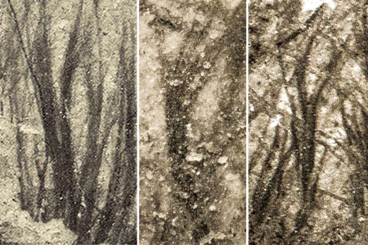 Съёмка крупным планом перьев птерозавра.