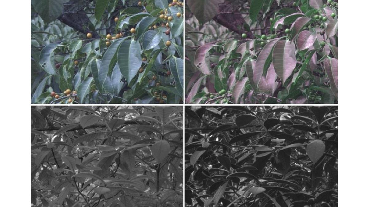 Изображения слева сделаны обычной камерой, изображения справа – камерой с птичьим зрением.