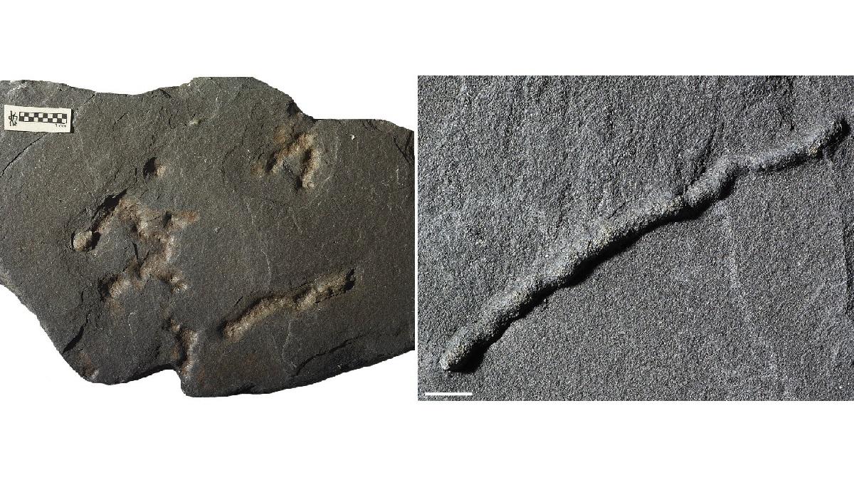 Уникальные окаменелости были найдены в сланцевых породах на территории современного Габона.