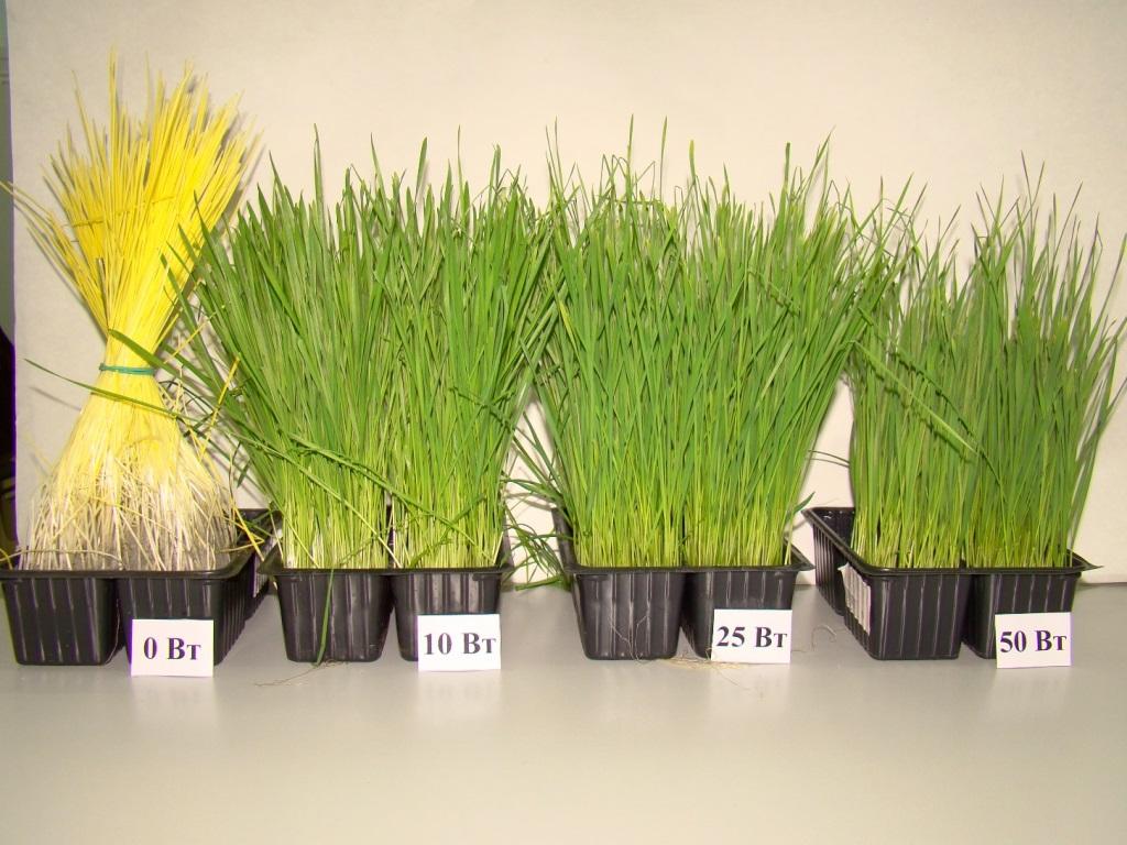 Искусственное освещение поможет выращивать растения в самом неподходящем климате.